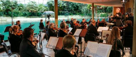 Berliner Symphoniker unter Leitung von Hansjörg Schellenberger im Flusspferdhaus des Berliner Zoos.